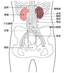 痛み 内臓 腰 の 左