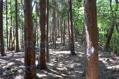 植林と雑木林