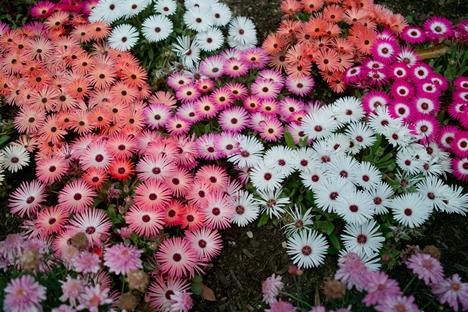妙見温泉 足湯横の花壇