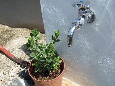 庭用散水栓