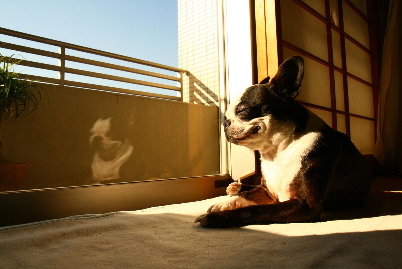 日光浴は大好き。