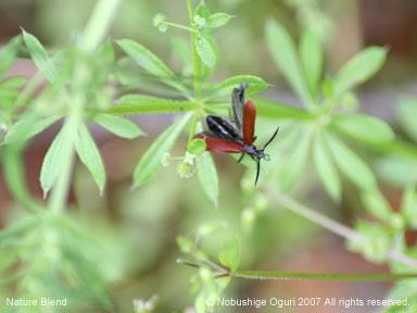 真鶴の甲虫