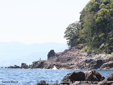 真鶴の海と魚付き保安林