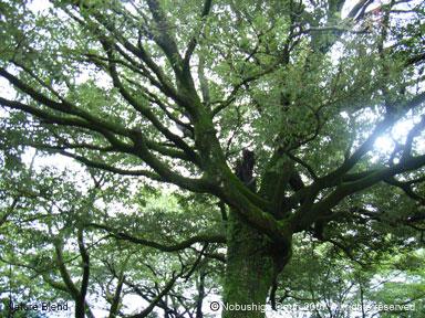 常緑広葉樹の林