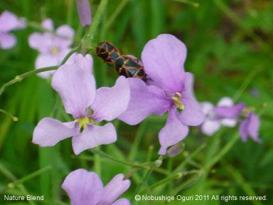 5月の里山の自然2.jpg