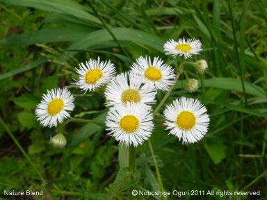 5月の里山の自然3.jpg