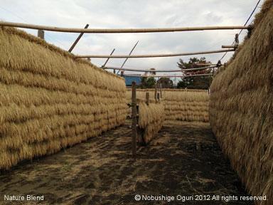 お米の生産を身近に.jpg