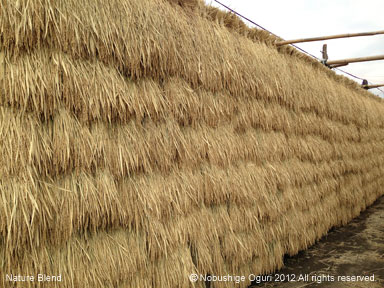 お米の生産を身近に2.jpg