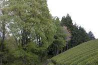岸田真理子2010年5月個展会場