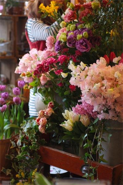 Février leçons de fleurs