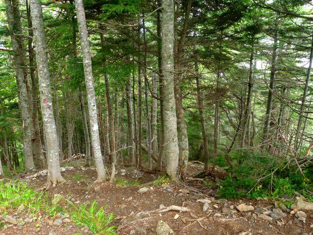 北沢峠からの登山道