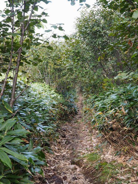望岳台歩道