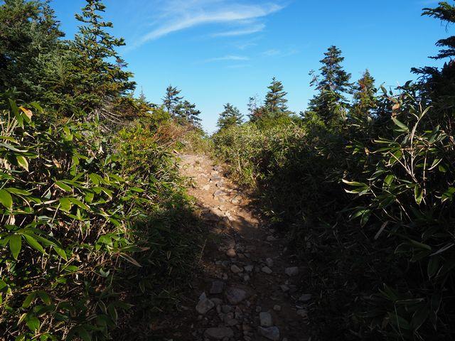 薬師岳登山道