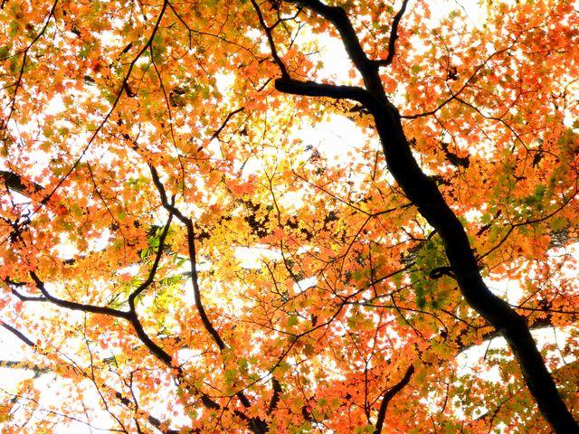 カンカケ谷紅葉