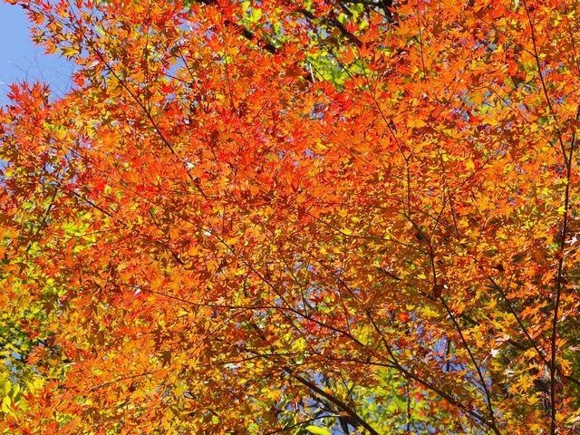 轟の滝紅葉