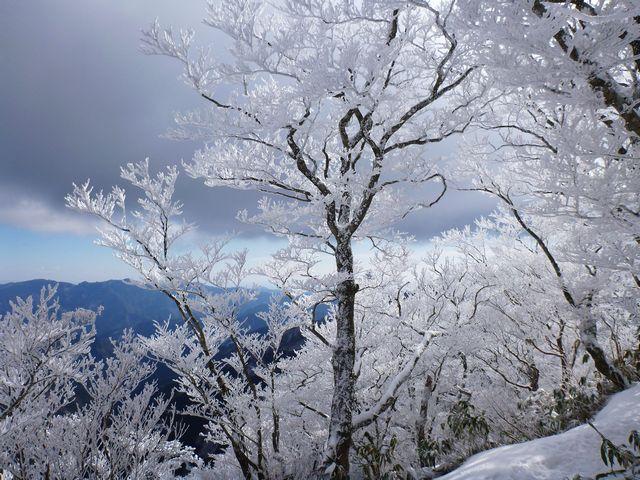 寒風山霧氷
