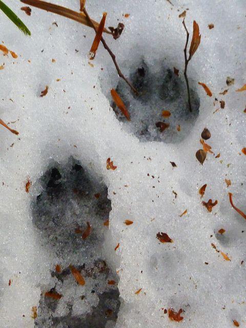 小動物足跡