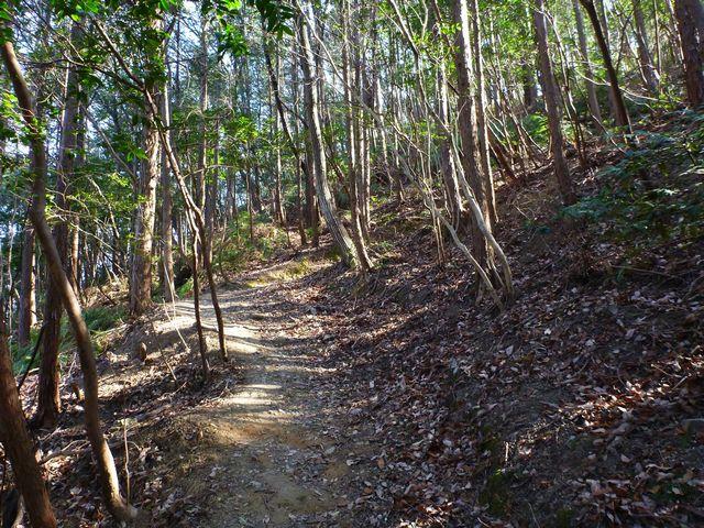 南嶺登山道