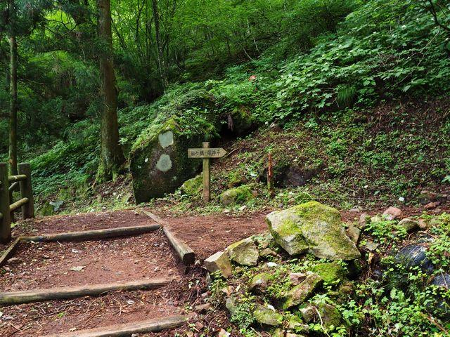 皿ヶ嶺登山道