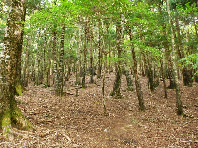 三嶺林道終点コース