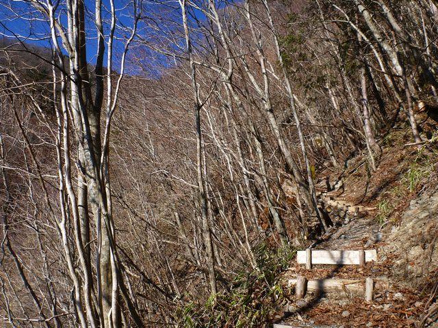白髪分岐登山道
