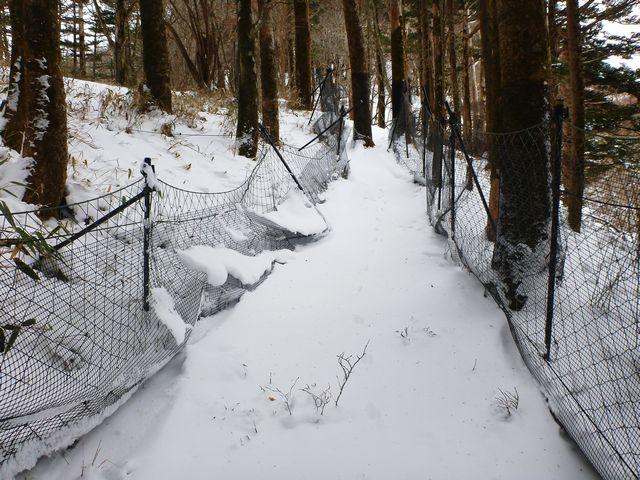カヤハゲ西尾根