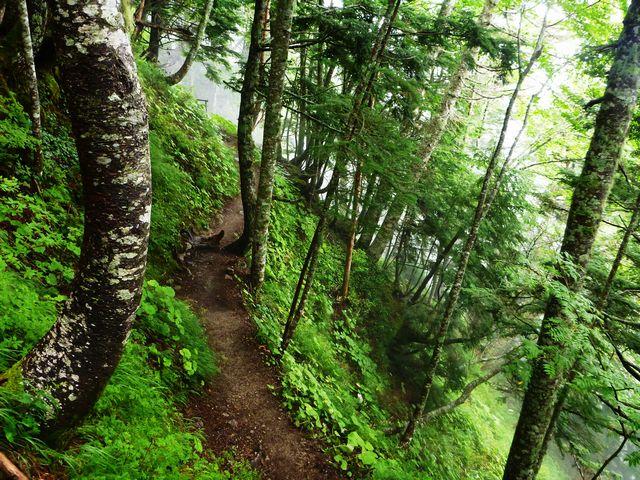 空木岳登山道