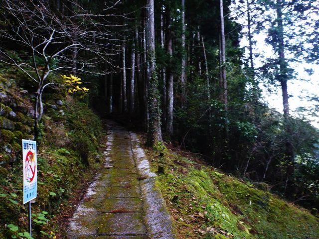 塩へ越える山道