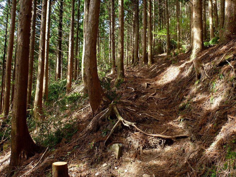 大永山トンネル登山口〜七番越