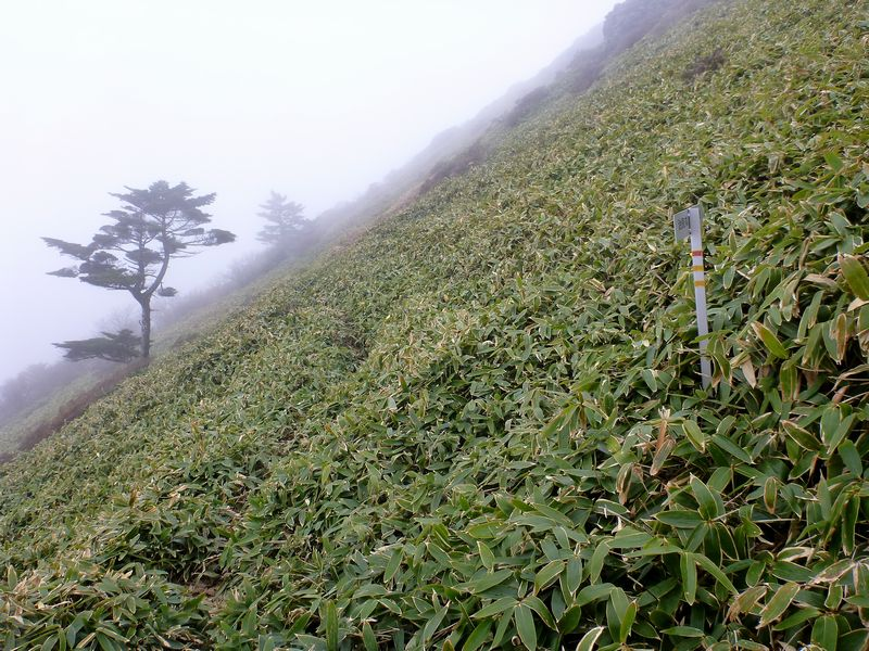 ちち山トラバース