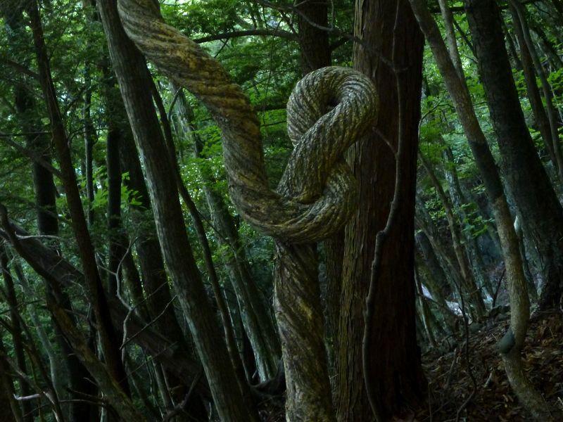 迷走する木
