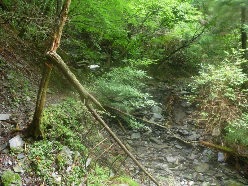 大森山登山道