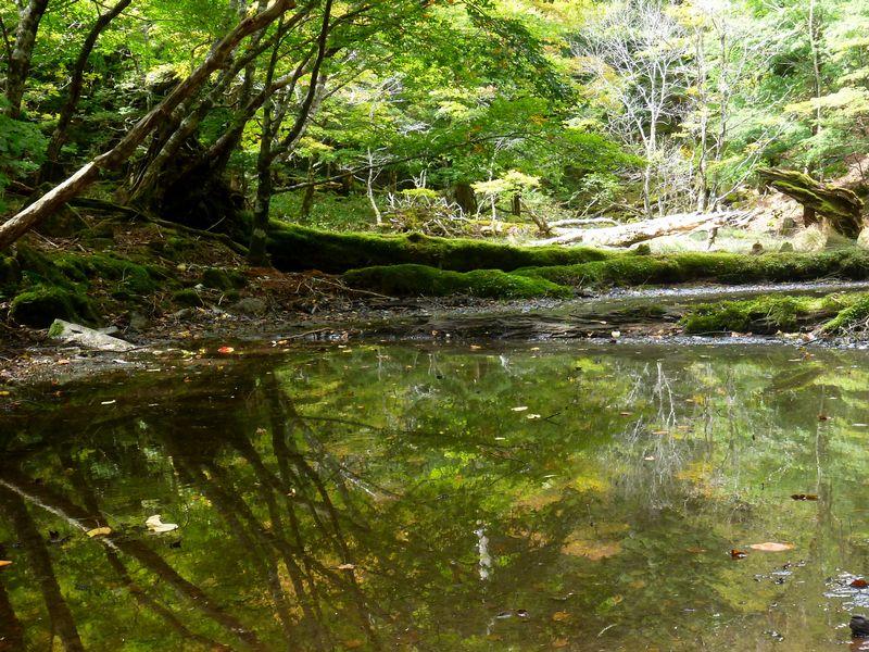 竜神さんの池