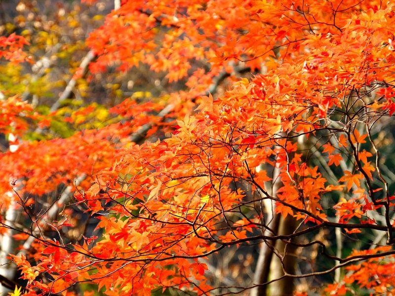 西熊渓谷・紅葉
