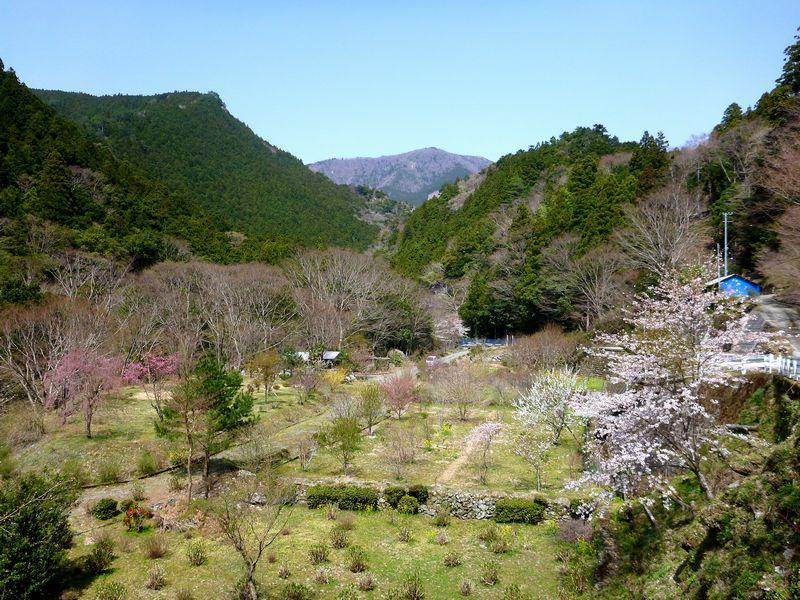 土佐矢筈山
