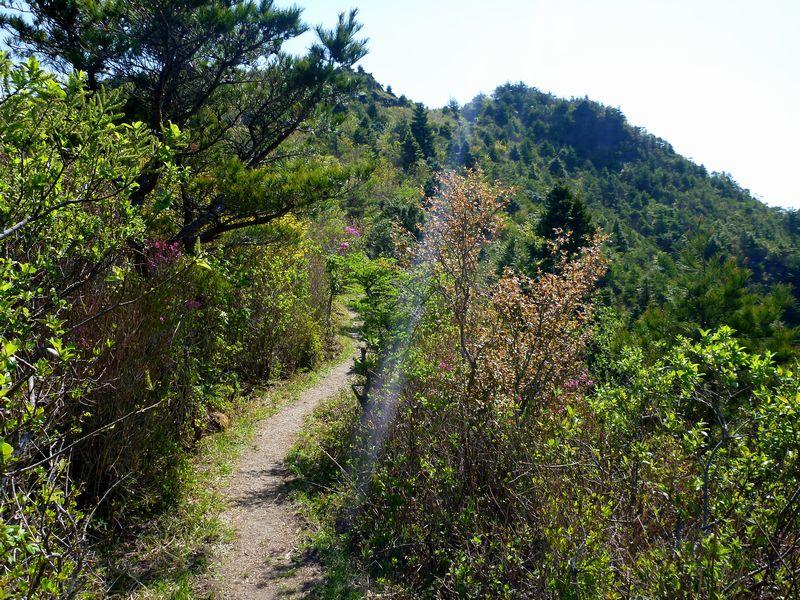 西赤石山登山道