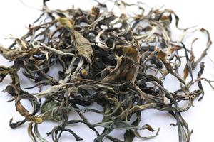 革登単樹秋天散茶2014年プーアル茶