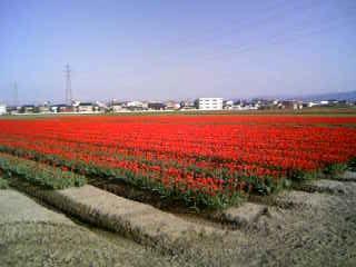 赤い絨毯だ