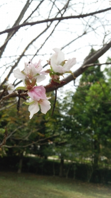 秋に桜の花が