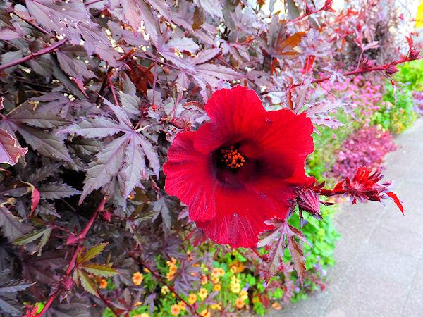 よさみに咲いていた花