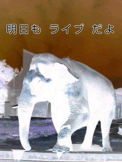 象.jpg
