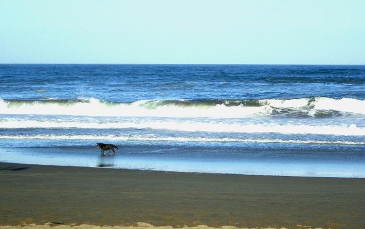 海辺を歩く犬