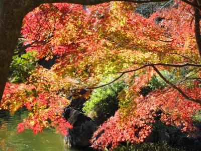 成田の紅葉