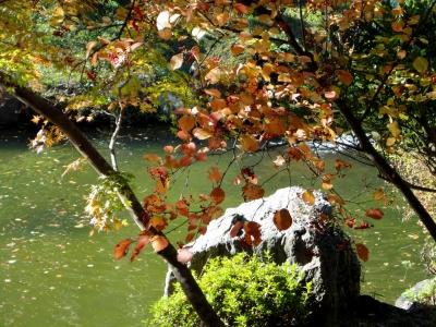 池之端のガマズミ