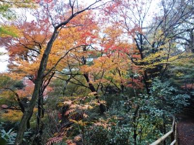 椿山荘、紅葉