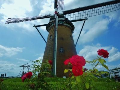 風車と赤いバラ