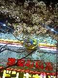 20070329_361098.jpg