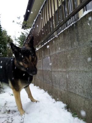お隣の屋根から雪崩注意報