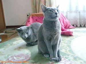 LONO&T姐さん
