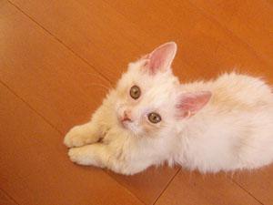 猫カフェ 猫の手